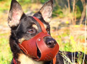 leather dog muzzle for biting prevention