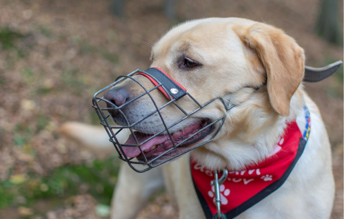 How To Choose The Correct Dog Muzzle For Biting