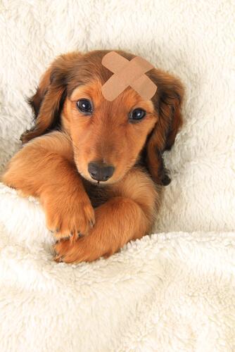 puppy needs pet urgent care