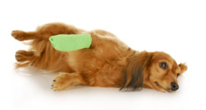 dog wound care