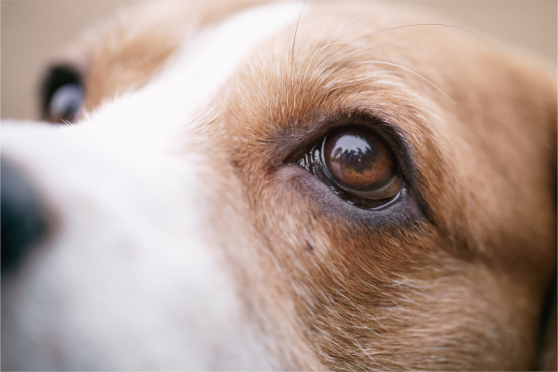 Common dog eye problems