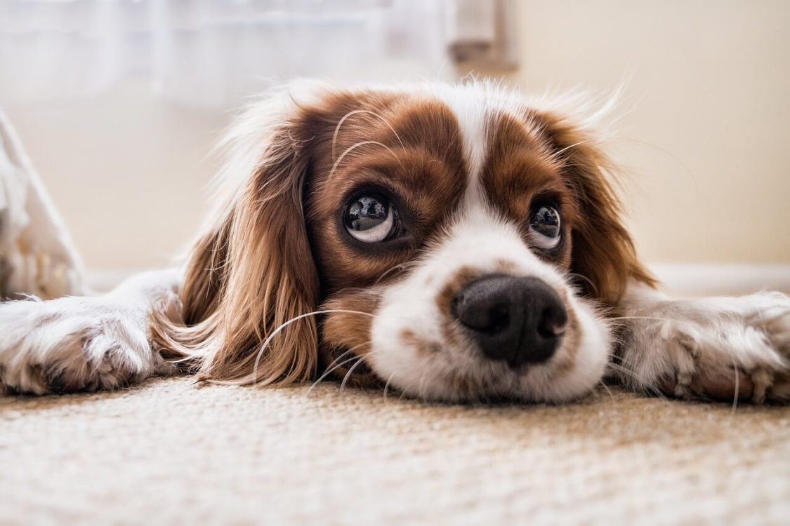 Dog Dry Nose Treatment: All you need to know