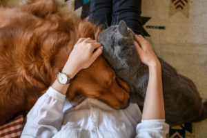 how to take care of pets
