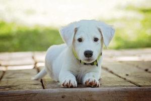 dog training collars tips