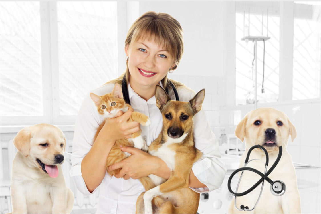 Components Of A Healthy Pet Center