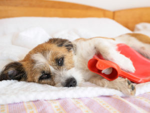 pain medicine for dogs