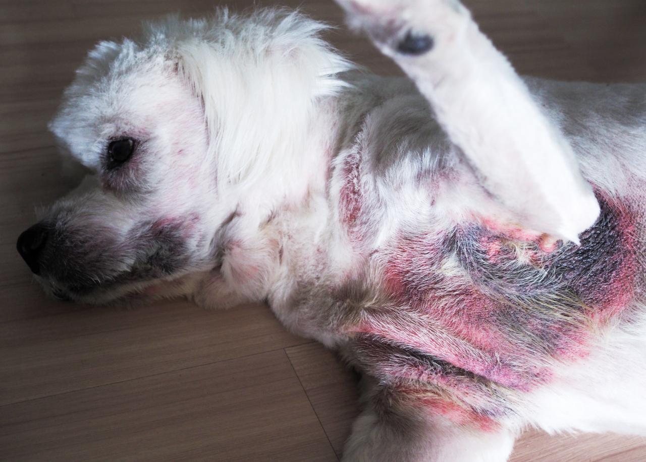 dog has rash on belly