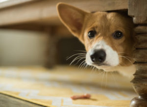 how to help a fearful dog gain confidence