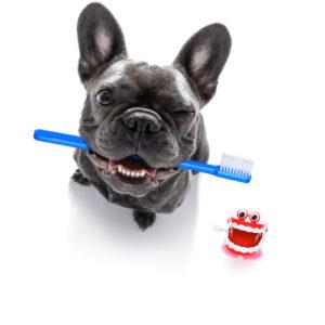 dog and cat dentist