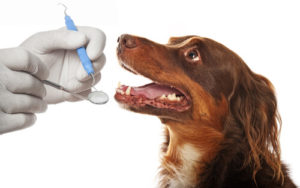 dog root canal cost