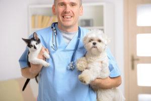 Clean Your Vet Clinic Via Sterilization With Tuttnauer Autoclave