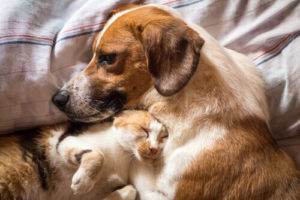 Home Visit Vet Treatments For Cats And Dogs