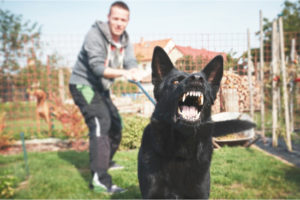pet owner stopping aggressive dog