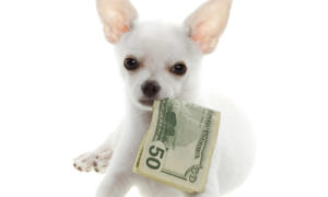 dog's teeth cleaning can get expensive