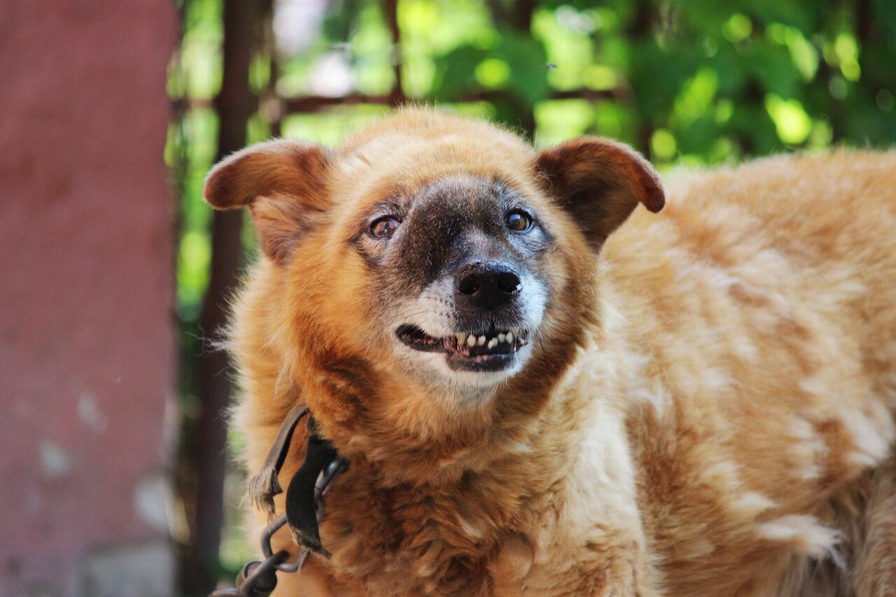dog nose cancer