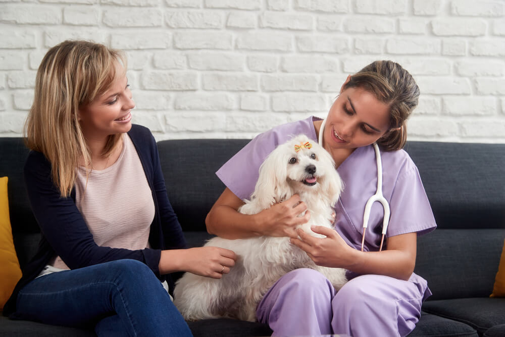 Quality Reasons For Choosing Home Vet Care